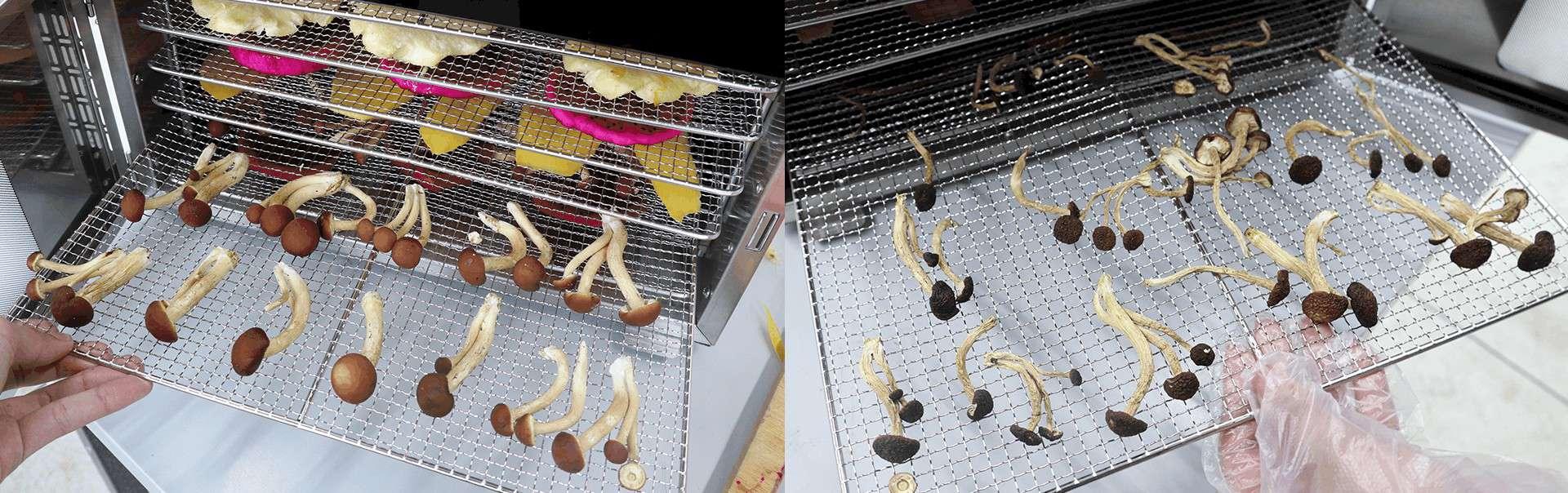 เครื่องอบแห้ง เครื่องอบผลไม้แห้ง -ก่อนและหลัง 4